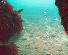 Boblerev - hule - gasbobler