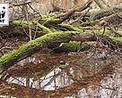 WWF Verdensnaturfonden ønsker mere urørt skov og flere overdrev i Nationalpark Skjoldungernes Land.