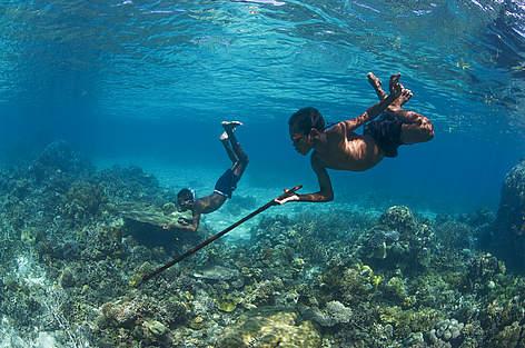 Papua Fisk Ulandsarbejde / ©: Toppx2