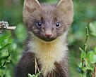 Analysen 'Biodiversitetsbarometer – vurdering af Danmarks indsats for biodiversitet 2016' er foretaget af WWF Verdensnaturfonden og Danmarks Naturfredningsforening.