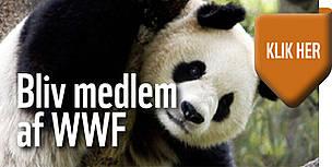 WWF, medlem,banner,støt / ©: WWF