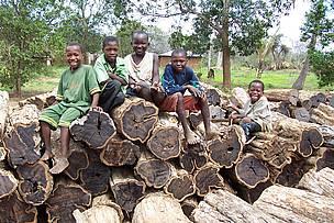 ibenholt træ til salg