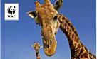 / ©: Martil Harvey/ WWF