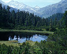 Peat bog in Fir trees forest. Alpine wetland in Wiegenalp, Hohe Tauern National Park, in the Austrian Alps. Austria