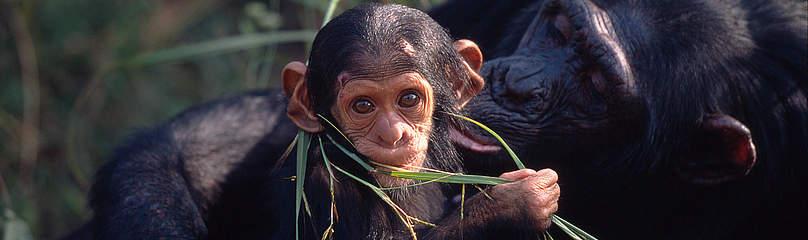 / ©: Martin Harvey / WWF