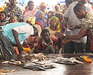 Fiskemarked i Dar es Salaam, Tanzania.