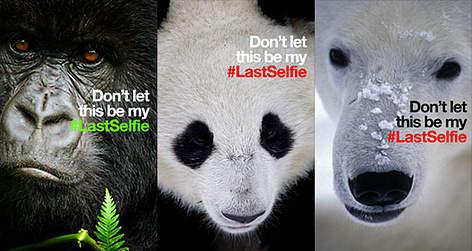 Forside banner / ©: WWF