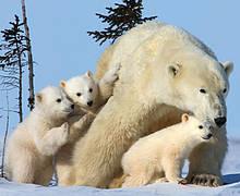 / ©: David Jenkins / WWF