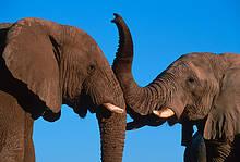 / ©: WWF / Canon