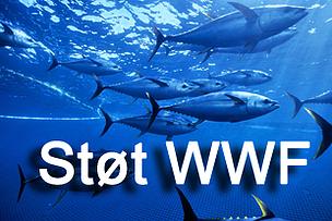 / ©: naturepl.com / Doc White / WWF