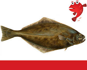 wwfs arbejde hav og fiskeri wwf fiskeguide fiskene alfabetisk