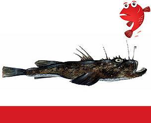 Havtaske Fiskeguide