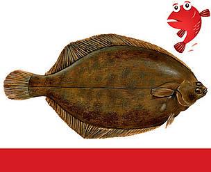 Rødtunge Fiskeguide
