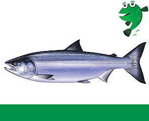 Alaskalaks Fiskeguide