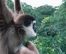 I Myanmars store skove er livet vildt