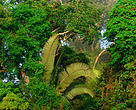 Regnskov Skov Brasilien Tømmer Træ
