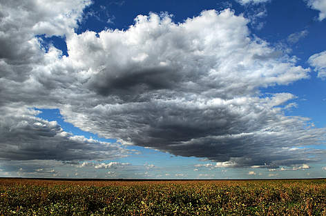 Soja Landbrug / ©: Adriano Gambarini / WWF-Brazil