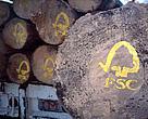 FSC Skov Mexico Tømmer Skovhugst Træ