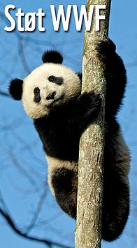 / ©: © naturepl.com / Andy Rouse / WWF