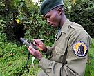 Virunga Nationalpark Østafrika Congo Gorilla Afrika