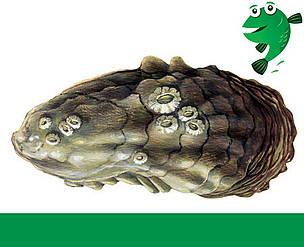 Østers Fiskeguide